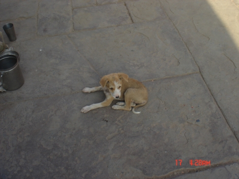 Cute puppy in Varanasi