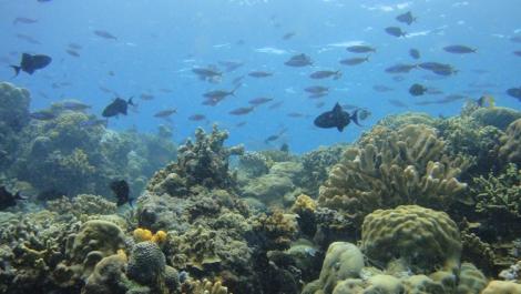 beautiful coral & reef fish